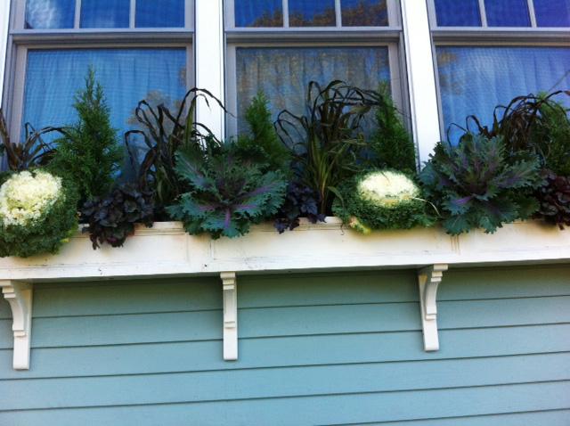 trồng rau bên cửa sổ