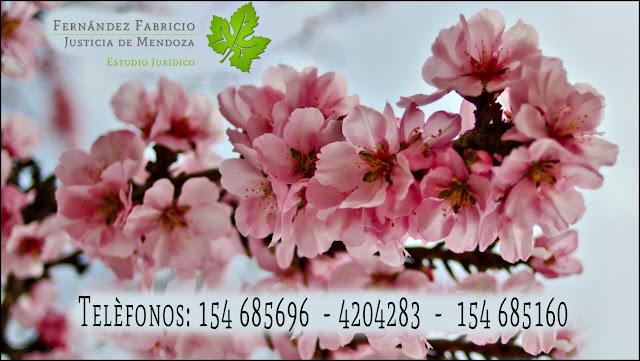 Teléfonos oficina Dr. Fabricio Fernandez, abogado de Mendoza