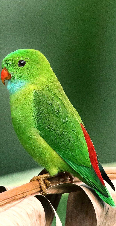 A beautiful green parrot.