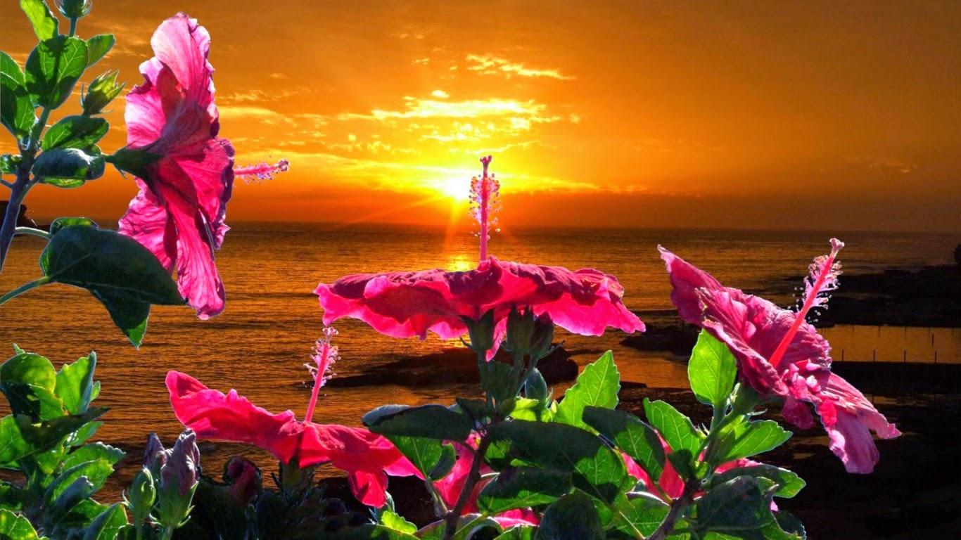 Meilleurs fonds d 39 crans paysages et fleurs fond ecran pc for Fond ecran ete fleurs