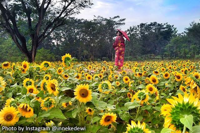 Taman Bunga Nawari