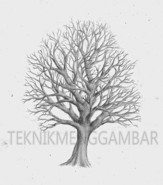 Contoh Gambar Sketsa Pohon Dengan Pensil Yang Sederhana Auto