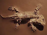 Asal Usul, Evolusi dan Klasifikasi Reptil