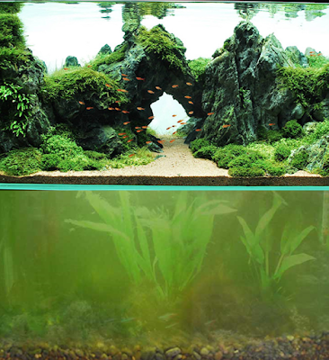 ADA aquascape versus green algae tank