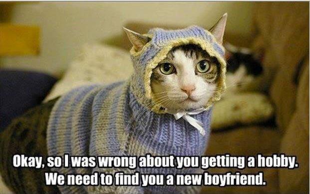 Funny Find A New Boyfriend Cat Picture Meme