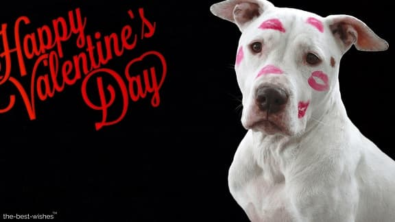 happy valentine day with kisses on dog face