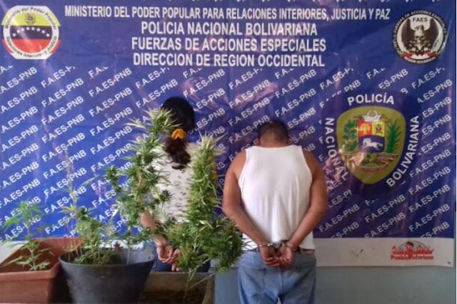 Funcionarios de las Fuerzas de Acciones Especiales (FAES) a través de algunas investigaciones llegaron a la casa número 143 en la calle Manaure del sector Los Cedros de Cabudare, municipio Palavecino del estado Lara y detuvieron a una pareja.