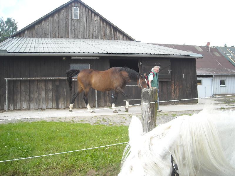 nervöse pferde füttern