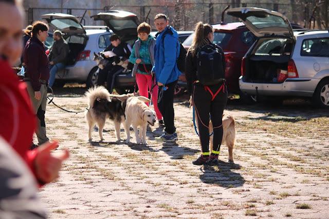 dogtrekking, zaowdy, marsz z psem, aktywność, pies, szczęśliwy pies, zmęczony pies, bieg na orientację
