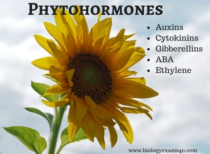 An Overview of Plant Hormones (Phytohormones)