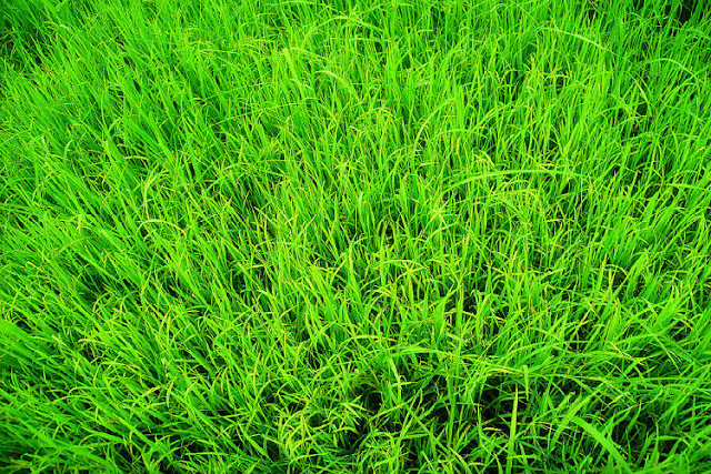 artificial grass for less