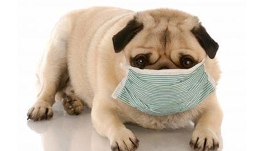 Laringite - causas, sintomas e tratamento