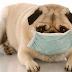 Saiba mais sobre a tosse do seu cão