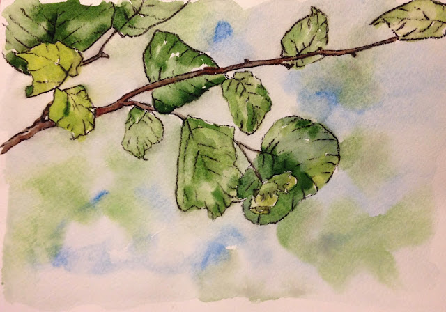 Wednesday, 22nd August 2018 - Cobnuts, Charcoal and Watercolour Painting