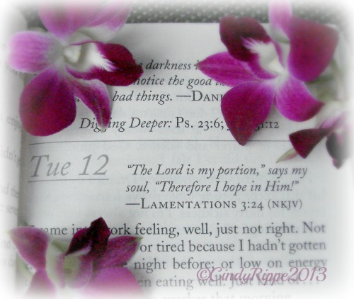 Daily Guidepost, purple orchids, orchid study, devotional, Lamentations 3:24, Bible Verse, not feeling well, doing too much, Florals-Family-Faith, Cindy Rippe
