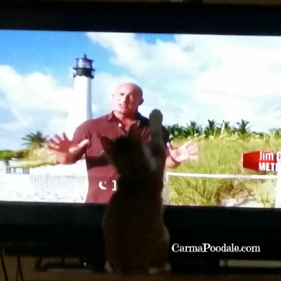 Kitten is big fan of Jim Cantore