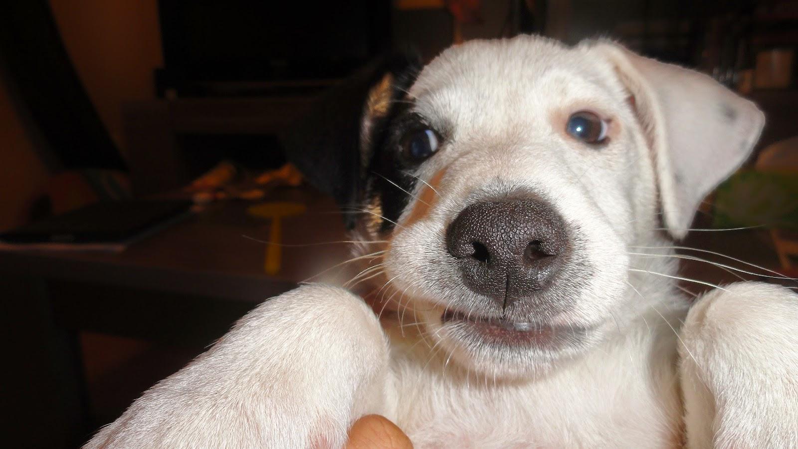 Osteonimaux Blog: Mal de dents : Chiot