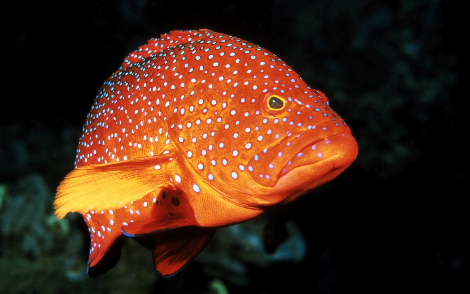 hd animal wallpapers pictures of fish ocean wallpapers chapter 2
