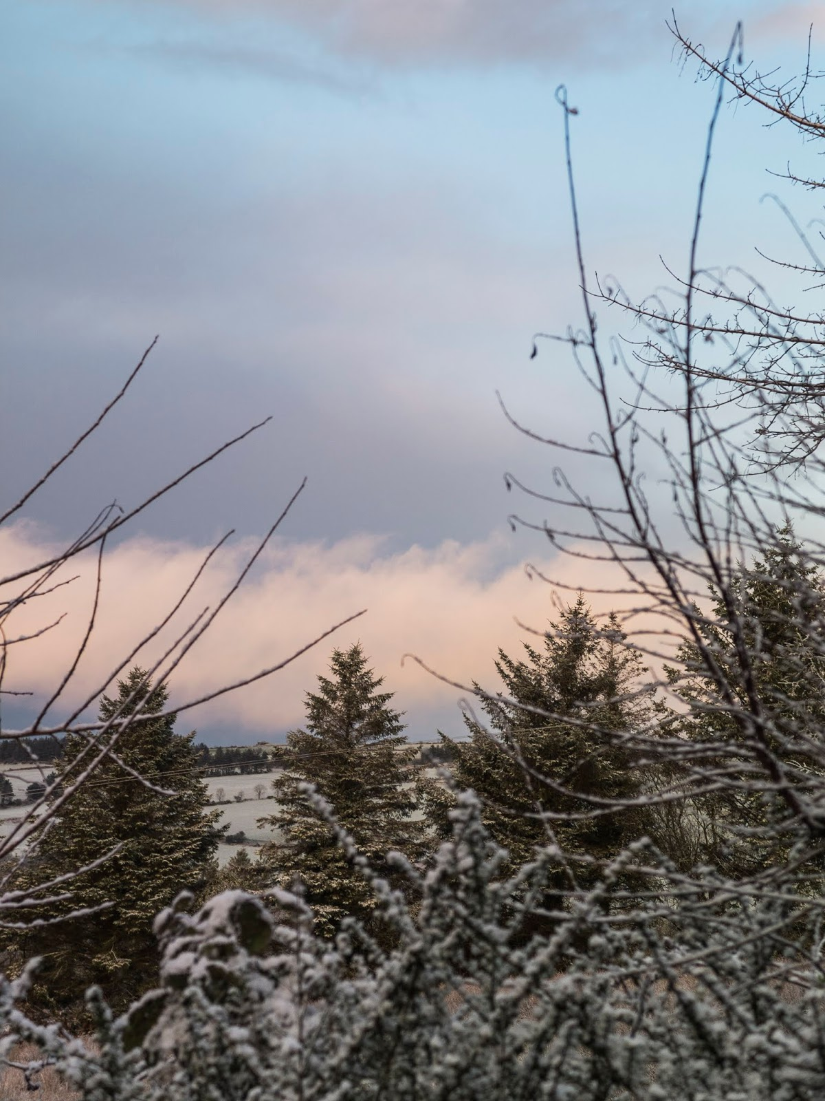 Sunset clouds behind snowy branches on a hillside.