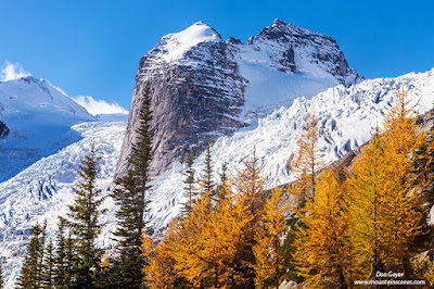 Hound's Tooth and the Anniversary Glacier above fall larches in Bugaboo Provincial Park, British Columbia, Canada.