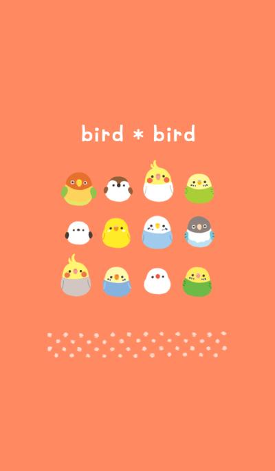 bird*bird
