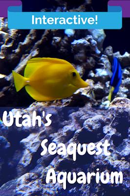 Layton aquarium