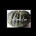 Bí rợ da ếch (Bliss Pumpkin) - Cucurbita moschata