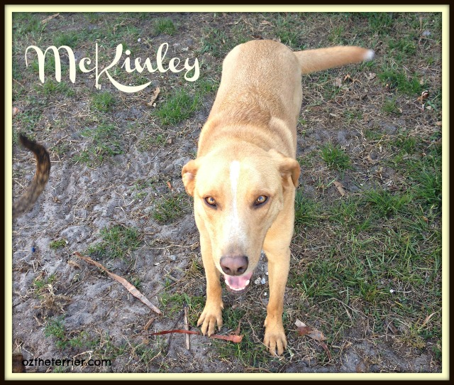 McKinley - A Pet's Peace poem by Tracy M Johnson