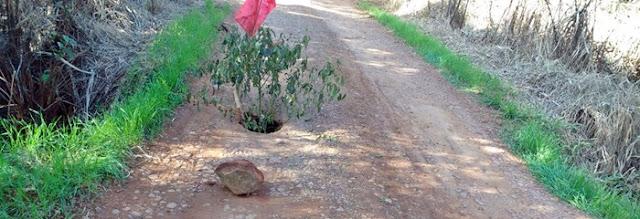 Mato Rico: Em ano eleitoral, população ajuda na sinalização da estrada