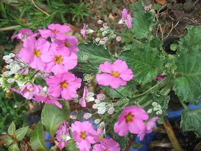 imagen flores primavera