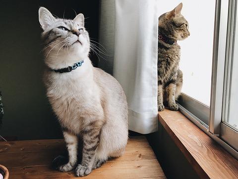 窓辺に佇む猫たち
