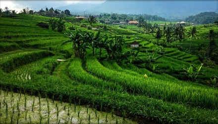 Paket Murah Liburan ke Bali
