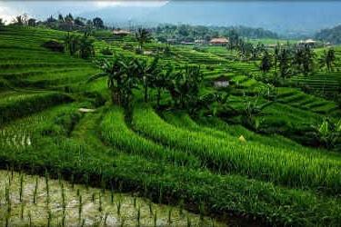 Mana yang Lebih Hemat, Paket Liburan ke Bali atau Liburan Sendiri?