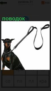 стоит собака у которой прицеплен поводок