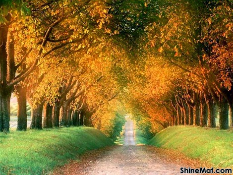 Hilly Autumn Avenue, USA