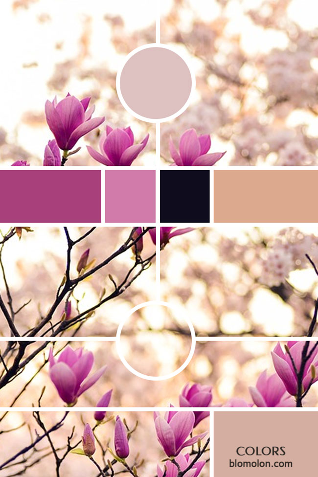 variedad_en_color_moodboards_4