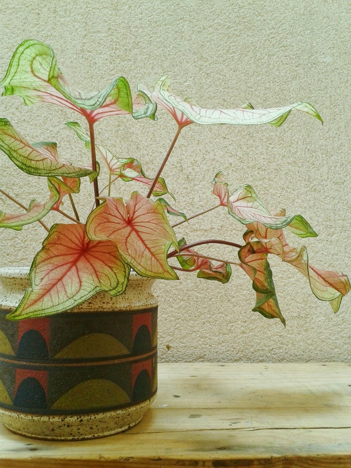 cerámica handmade
