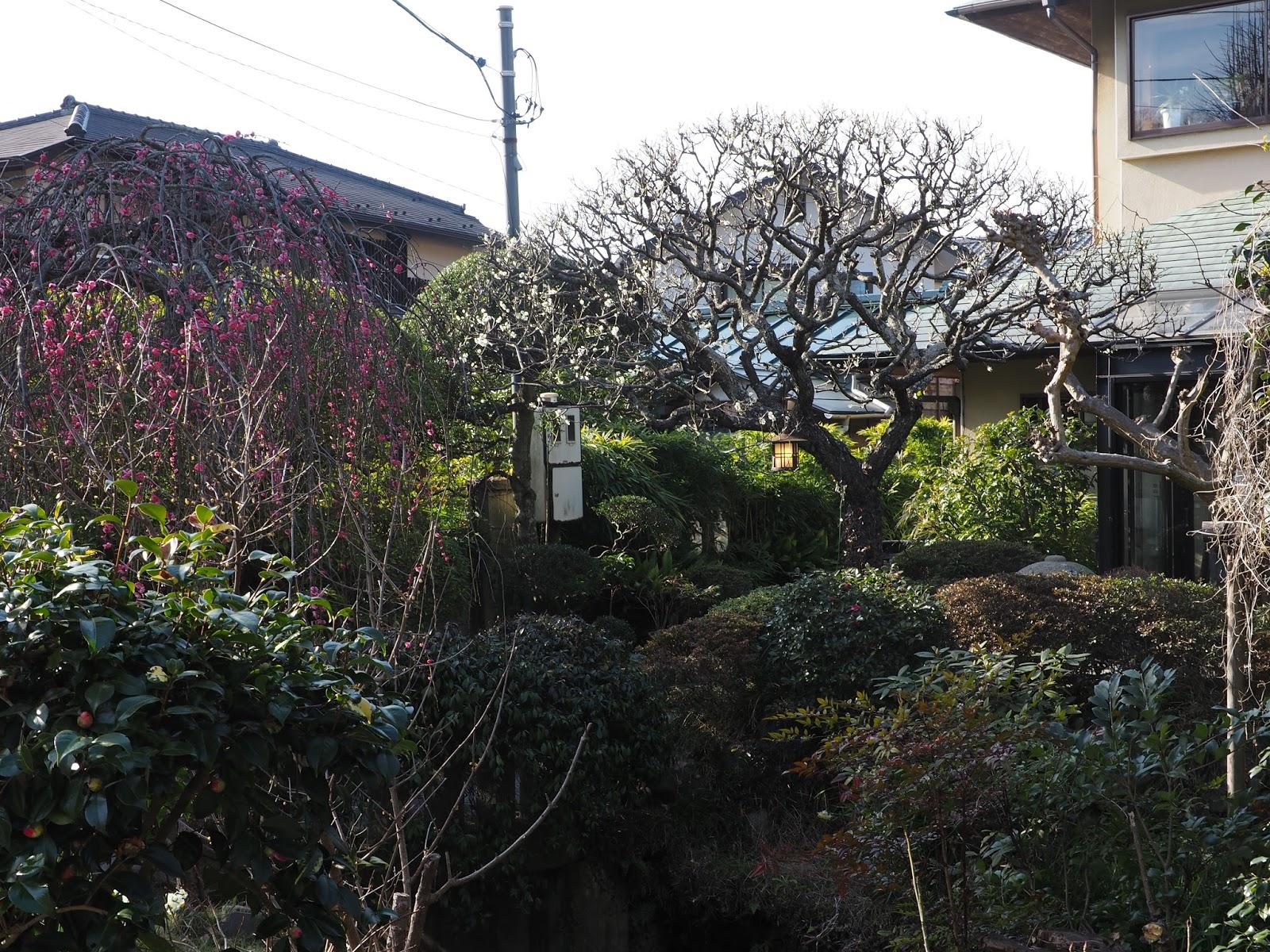 kanagawa japan landscape