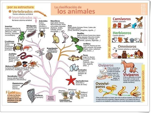 La clasificación de los animales (Infografía de Ciencias Naturales)