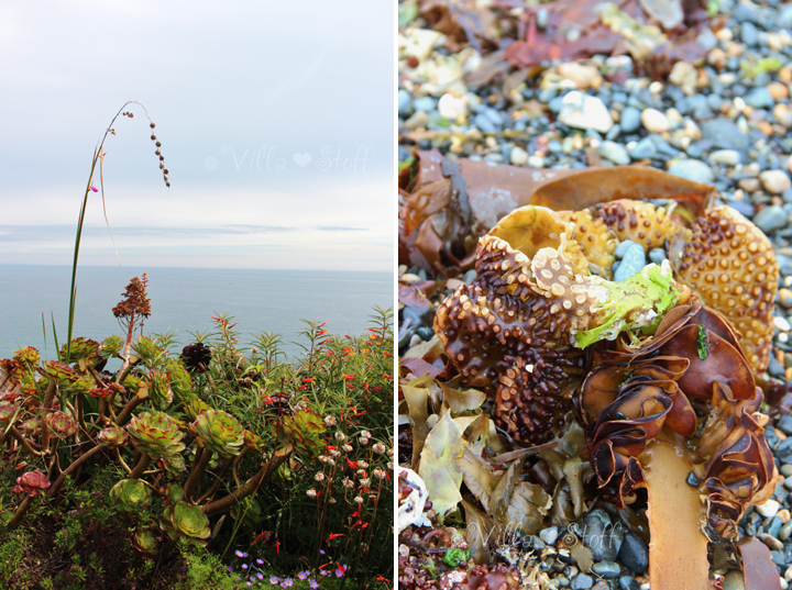 Flowers of Cornwall | Minack Theatre & Meerblumen