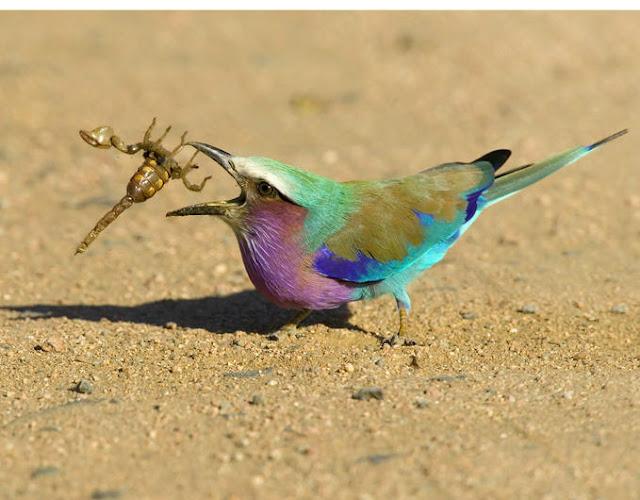 bird eating a scorpion