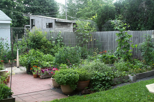 garden, gardening, raised beds, container gardening, Anne Butera, My Giant Strawberry