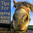 5 Tips for Keeping a Horse Alone