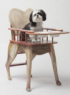 rações para cães