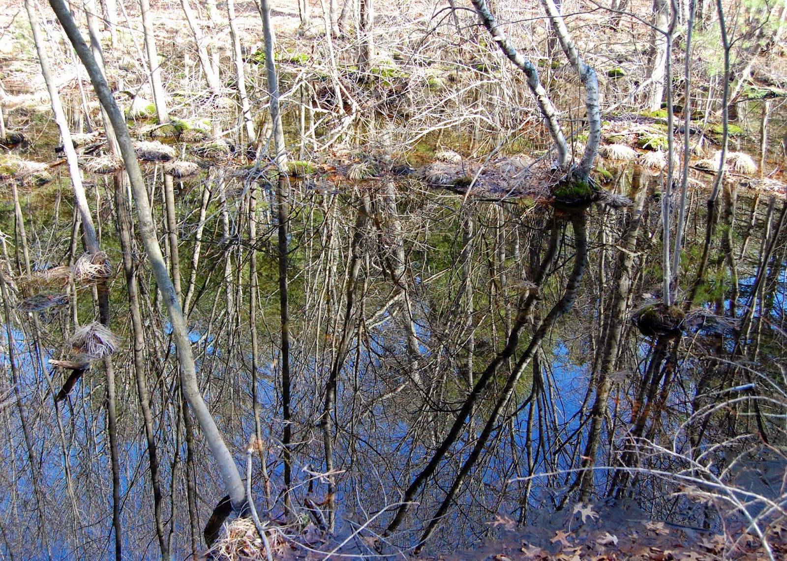 reflections along the trail side