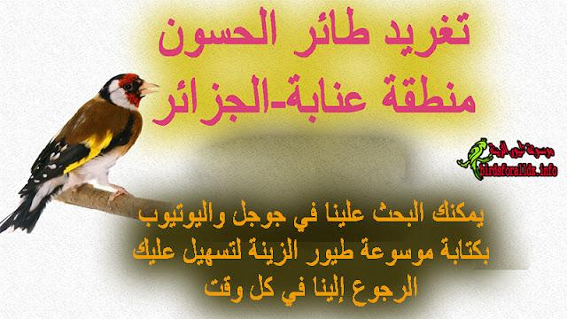 تحميل تغريد طائر الحسون منطقة عنابة الجزائربصغة MP3