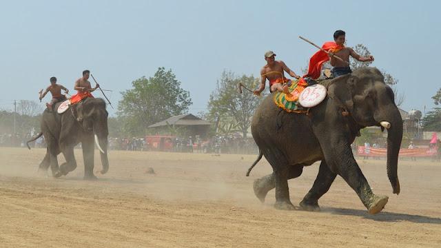 Elephant Racing Festival 2