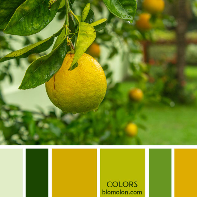 variedad_en_color_paletas_de_colores_74