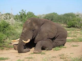 National Elephant that surprised Somalis9