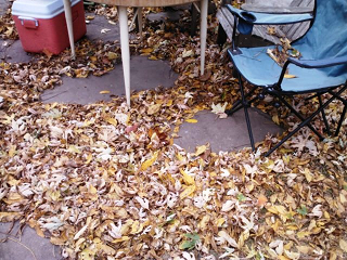 leaf covered porch